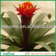 """Bromeliad - Fresh Cut Flower -""""Guzmania Focus"""""""