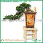 wonderful wholesale ficus bonsai tree indoor plant