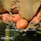 Fresh cycas revoluta (tropical rare tree plants seeds)