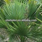 100% Natural Saw palmetto P.E with Total fatty acid