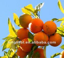 High quality bitter orange P.E. 98% Hesperidin