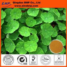 BNP Supply High Quality Gotu Kola Herb Extract Powder