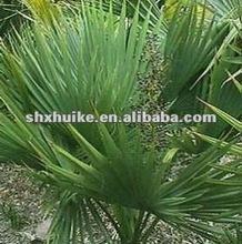 Top Quality Saw palmetto P.E. with 25% total fatty acids