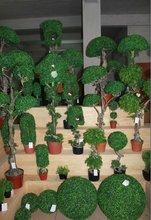 LT082014Artificial grass, artificial turf, decorative boxwood grass plant bonsai