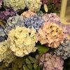 27033M artificial hydrangea silk flowers
