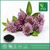 Red Clover Extract/Trifolium pratense L