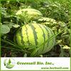 2014 Hybrid F1 seedless watermelon seeds