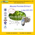 11 años con experiencia GMP fuente de la fabricación Mucuna Pruriens extracto