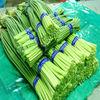 China New Crop Fresh Garlic Sprout