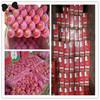 Hot Season Fresh Qinguan Apples for 20kg 19kg