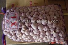 2013 Chinese Red Skin Garlic