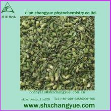 antioxidant properties Rutin sophora japonica extract