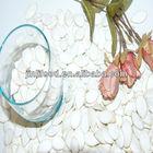 aa snow white pumpkin seeds pure white 2012 crop top quality