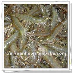 frozen fresh penaeus white vannamei shrimp suppliers