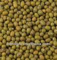 Mung bean origine chine machine propre qualité taille 3.0mm ou cuire la germination de haricot mungo