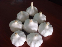 2015 Chinese New Pure white Garlic With Good Quality