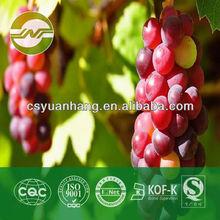 grape seed extract proantocyanidins 95%