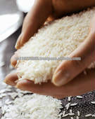 The Good Quality Long Grain White Rice 5% broken
