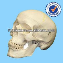 2014 New Hot halloween decoration Artificial Resin skull