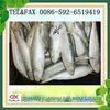 all types of seafood sardine fish
