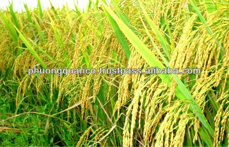 Good Vietnamese Long Grain White Rice 100% broken
