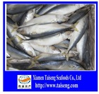 BQF Frozen seafoods of Pacific Mackerel WR BY light