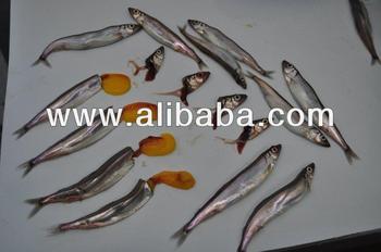Capelin Fish