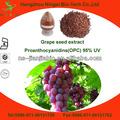 de semilla de uva extracto