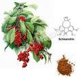 alta qualidade schisandra chinensis pó do extrato