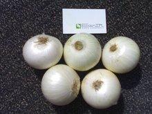 Indios Blancos de cebolla