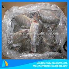 frozen fish tilapia 300-500g iqf baby tilapia