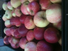 Fresh RED apples from Poland Idared,Gloster,Champion,Jonagored, Jonagold,Ligol, Gala Must, Gala Royal