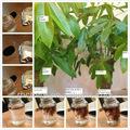 El ácido húmico + de óxido de potasio fertilizante orgánico