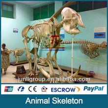 JLDF-G-0007 artificial resin Elephant Skulls