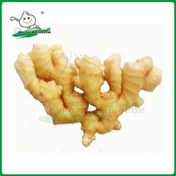 Ginger/Fresh ginger/China fresh ginger