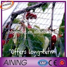 Bird cage netting/high strength anti bird net/vineyard bird netting