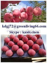 chinese sweet honey red yantai fuji apple / Aimee