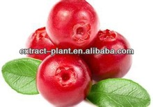 Fresh high quality Organic cranberry extract in stock supply