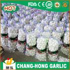 2014 price of Chinese natural garlic/normal white/pure white China natural garlic