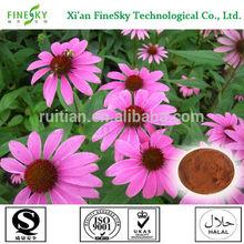 Best echinacea purpurea extract with polyphenol 4% for medicine