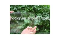 rocky qingdao shandong anti glare glass