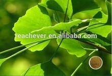 GINKGO BILOBA EXTRACT flavones 24% lactones 6% ginkgo biloba extract supplier