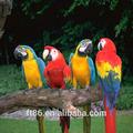 lifelike realistas bonito personalizado cancry finch pássaros para venda