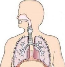 CEFTEZOLE SODIUM for Injection Indications for respiratory system Ceftezole Sodium
