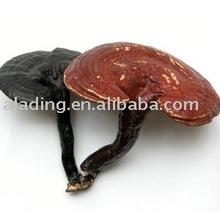 Ganoderma lucidum Polysaccharide