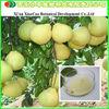 Plant Extract/Naringin 98%/citrus fruit extract naringin
