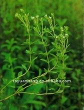 Hot supply !!!100% Pure Stevia Extract