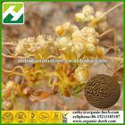 Cuscutae Seed Extract10:1