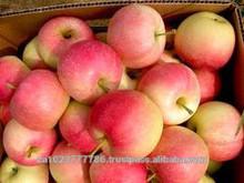 Fresh sweet Red Apples Fresh sweet Red Apples CLASS 1. HOT SALES