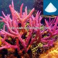 الشعاب المرجانية حوض للأسماك الزينة مياه البحر ملح البحر الزينة الاصطناعية
